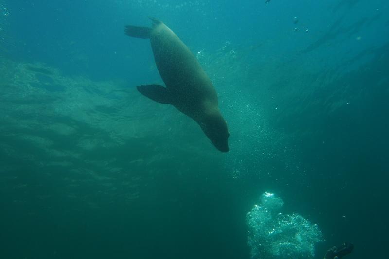 Diving in La Paz