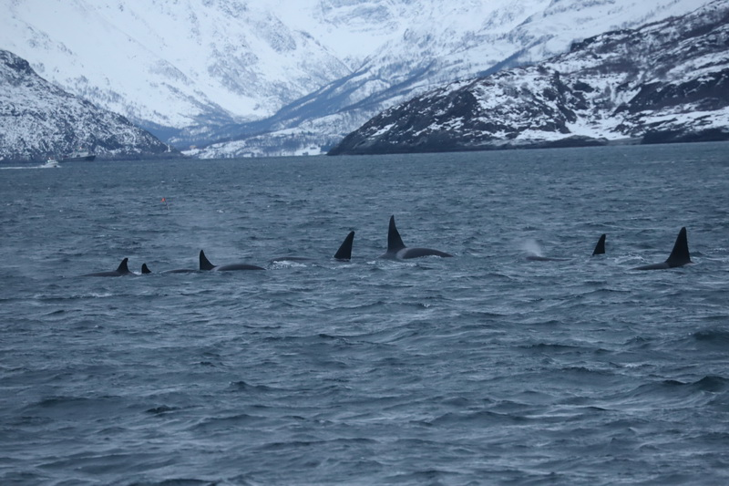 Day 4 on the water… lots of whales